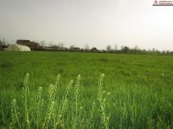 Prodaje se zemljište površine 894m2